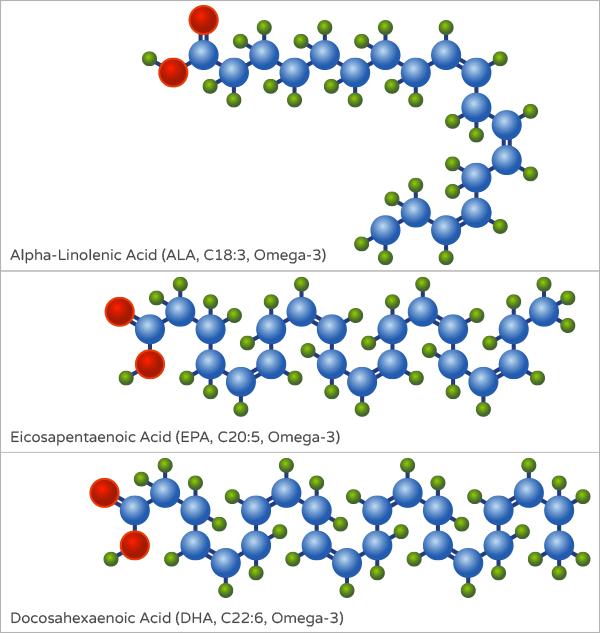 What Are Omega 3 Fatty Acids? | Ruled MeOmega 3 Fatty Acid Structure